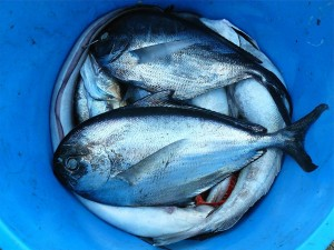 fish-422543_1920 (1)