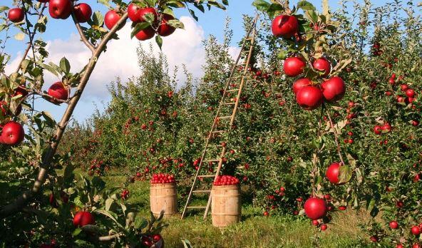investimenti agricoltura